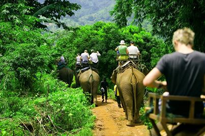 Elephant Trek in Chiang Mai